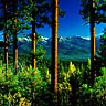 Pine Forest and Elkhorn Mountains of Eastern Oregon