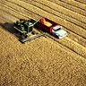 Umatilla County wheat harvest
