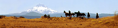 Mt Jefferson - Horses & Mules