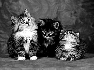 Kittens Three