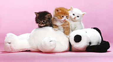 Snoopy and Kittens